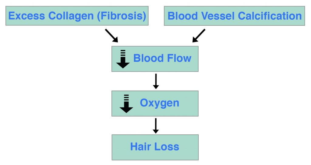 Calcification Fibrosis Hair Loss