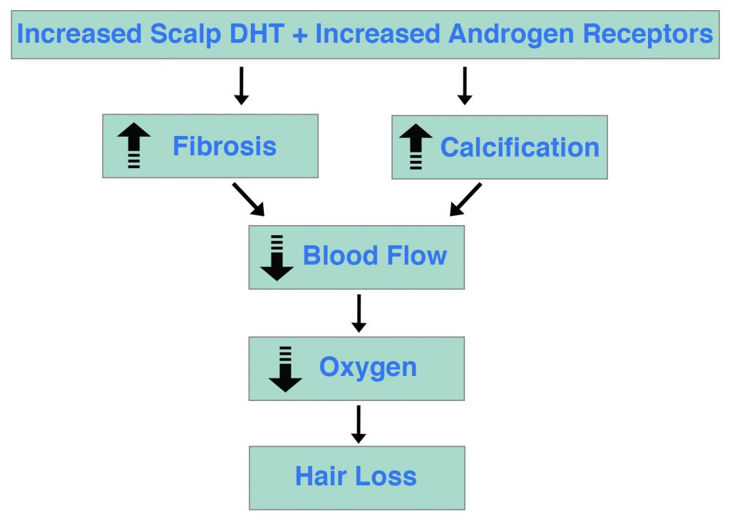 DHT Androgen Receptor Hair Loss