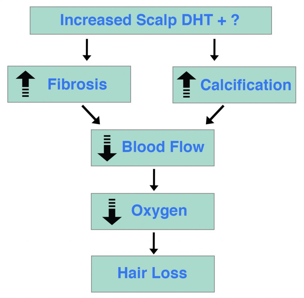 Scalp DHT Fibrosis Calcification