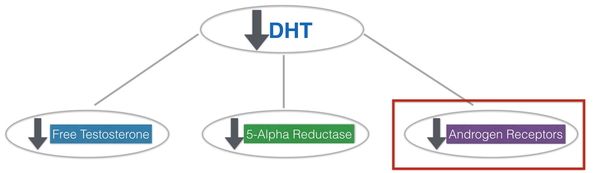 Attack DHT: A Master Guide To Blocking Androgen Receptors