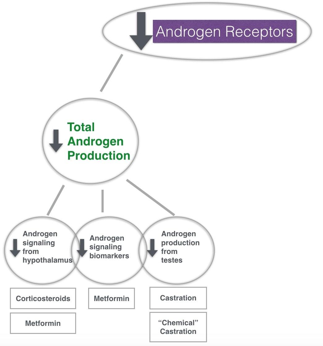 steroidale antiphlogistika
