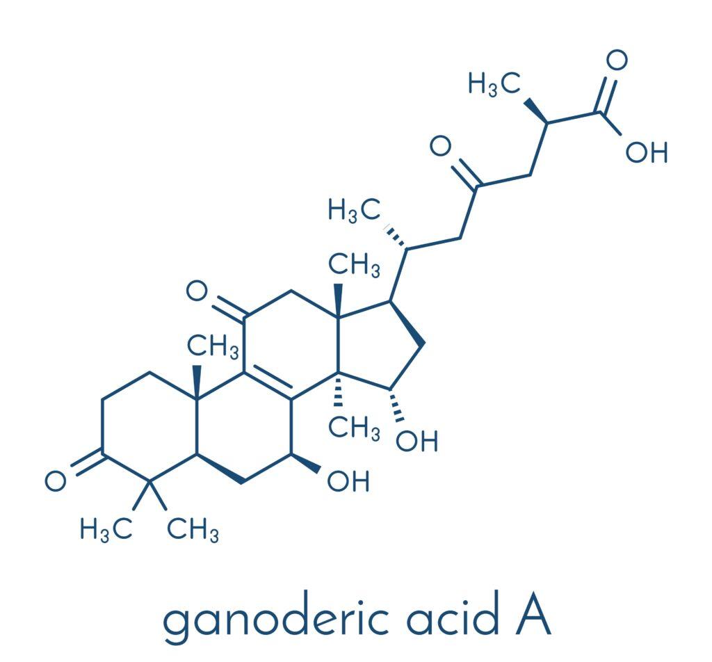Reishi mushroom ganoderic acids: treatment for AGA?